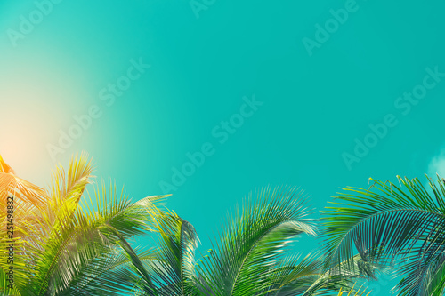 Tuinposter Palm boom Copy space of tropical palm tree with sun light on sky background.