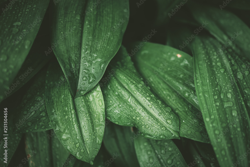 Fototapety, obrazy: Tropical nature green leaf texture abstract background.