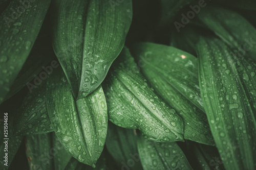 Tropical nature green leaf texture abstract background. - 251504656
