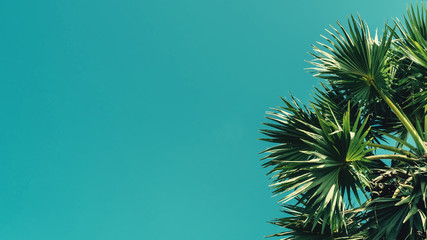 Tropical palm tree with sun light on blue sky and white cloud abstract background.
