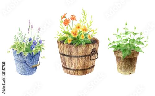 Fotografie, Obraz  ガーデニング 鉢植え セット