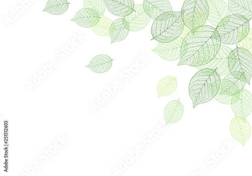 Fotografía Leaf background material