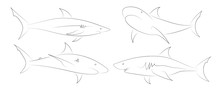 Black Line Sharks On White Background.