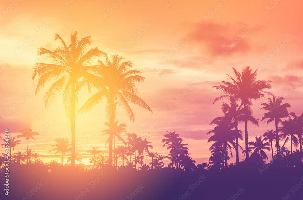Fototapety, obrazy: Copy space of tropical palm tree with sun light on sky background.