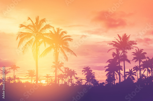 Deurstickers Palm boom Copy space of tropical palm tree with sun light on sky background.