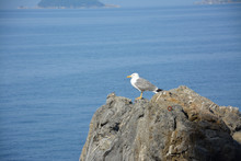A Solitary Seagull On The Rock