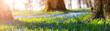 Leinwanddruck Bild - Scilla flowers in the park