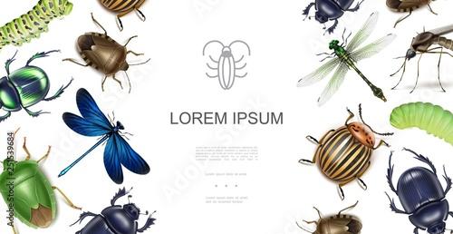 Fotografía Realistic Insects Concept