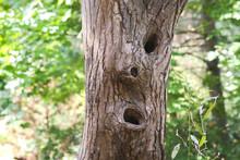 Surprised Look Of A Tree