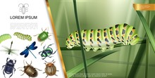 Realistic Insects Composition