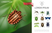 Realistic Insects Colorful Concept