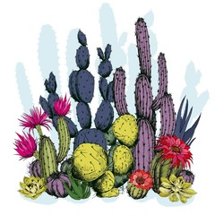 Fototapeta Egzotyczne Colorful cactus plants with flowers. Hand drawn vector on white background.