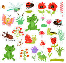 Frog And Insects Vector Set
