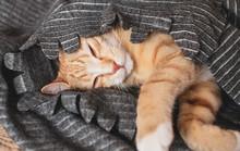 Cute Little Ginger Kitten Slee...