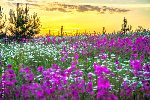 spring landscape with blooming wild flowers in meadow and sunrise