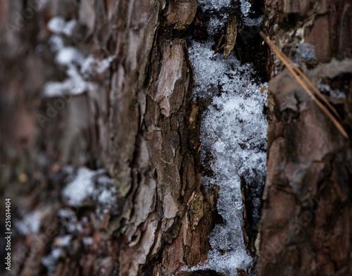 Garden Poster Birch Grove background macro wooden old tree bark