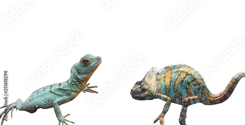 wild lizard isolated background