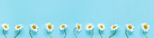Row Of White Chamomiles Daisies Flowers On Pastel Blue Color Paper Background Copy Space Template For Postcard, Lettering, Text Or Your Design Flat Lay Top View