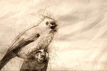 Sketch Of A Young Titmouse Singing In A Tree