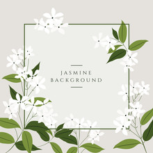 Vector Jasmine Flower Banners. Design For Tea, Natural Cosmetics, Beauty Store, Organic Health Care Products, Perfume, Essential Oil, Aromatherapy. Can Be Used As Greeting Card Or Wedding Invitation