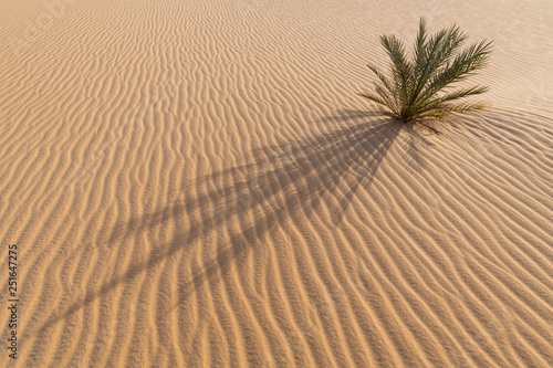 Fotografía  Small palm tree growing in the desert sand with a beautiful abstract background