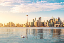 Toronto Skyline And Swan Swimm...