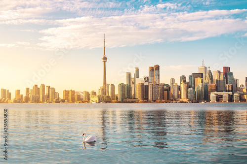 La pose en embrasure Canada Toronto Skyline and swan swimming on Ontario lake - Toronto, Ontario, Canada