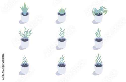 Set of isometric plants. Isolated indoor plants in flower pots. Fototapete