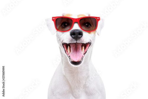 Fotografie, Obraz  Portrait of a funny dog Jack Russell Terrier in sunglasses isolated on white bac