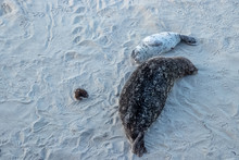 Aerial View Of Mother And Pup Sea Lions Resting On Beach With Smiles