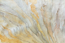 Colorful Abstract Pattern From Eucalyptus Tree Bark