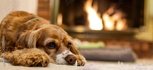 Cute Puppy resting by the fire Wallpaper Mural