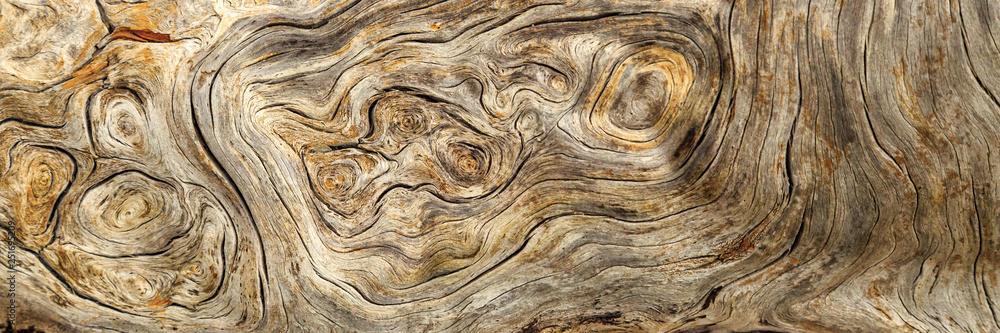 Fototapety, obrazy: Burlwood Stump