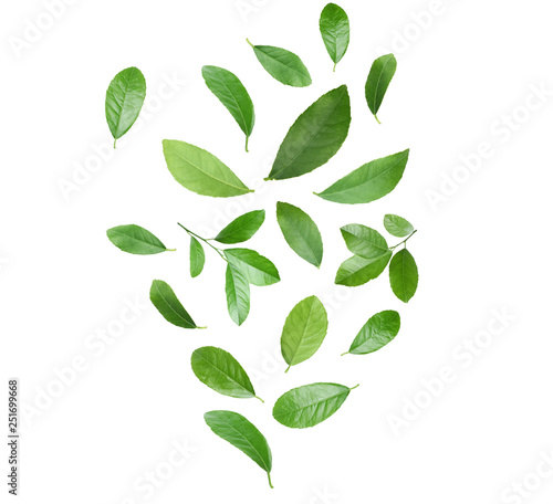 Photo sur Aluminium Arbre Set of flying green citrus leaves on white background