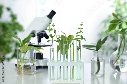 Photo  Glass tubes with plants in rack on table against blurred background