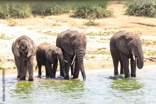 Fototapeta Bwindi Impenetrable National Forest Queen Elizabeth National Park obraz na płótnie