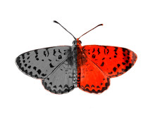 Bipolar Mental Disorter Butterfly Self Test Background