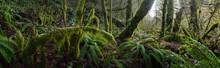Lush Dense Rainforest Vegetation