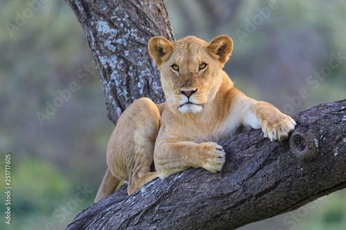 Canvas Print Ndutu Serenegti and Ngorongoro Safari 2019