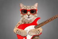 Cat Scottish Straight In Sungl...