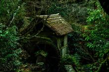 緑深い森の水車小屋の風景