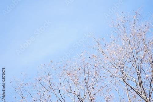 Poster Light pink 冬の澄んだ水色の空と木