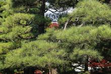 A Fall Season At Byodo In Temple Japan