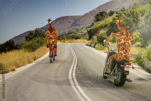 Fényképezés  Giraffe mit Fahrrad und Motorrad machen in Wüste eine Ausfahrt