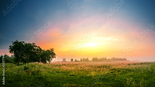Beautilful sunrise landscape with a tree in a field and a forerst on a background.