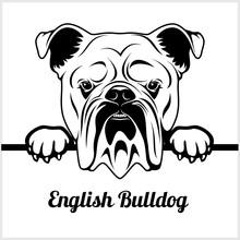 English Bulldog - Peeking Dogs...