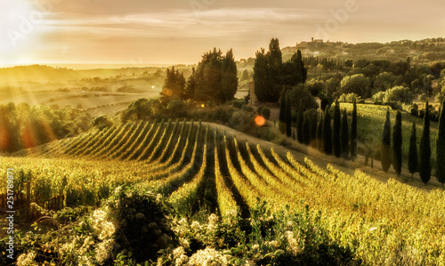 Foto op Canvas Wijngaard Tuscany, field, landscape, nature, italy