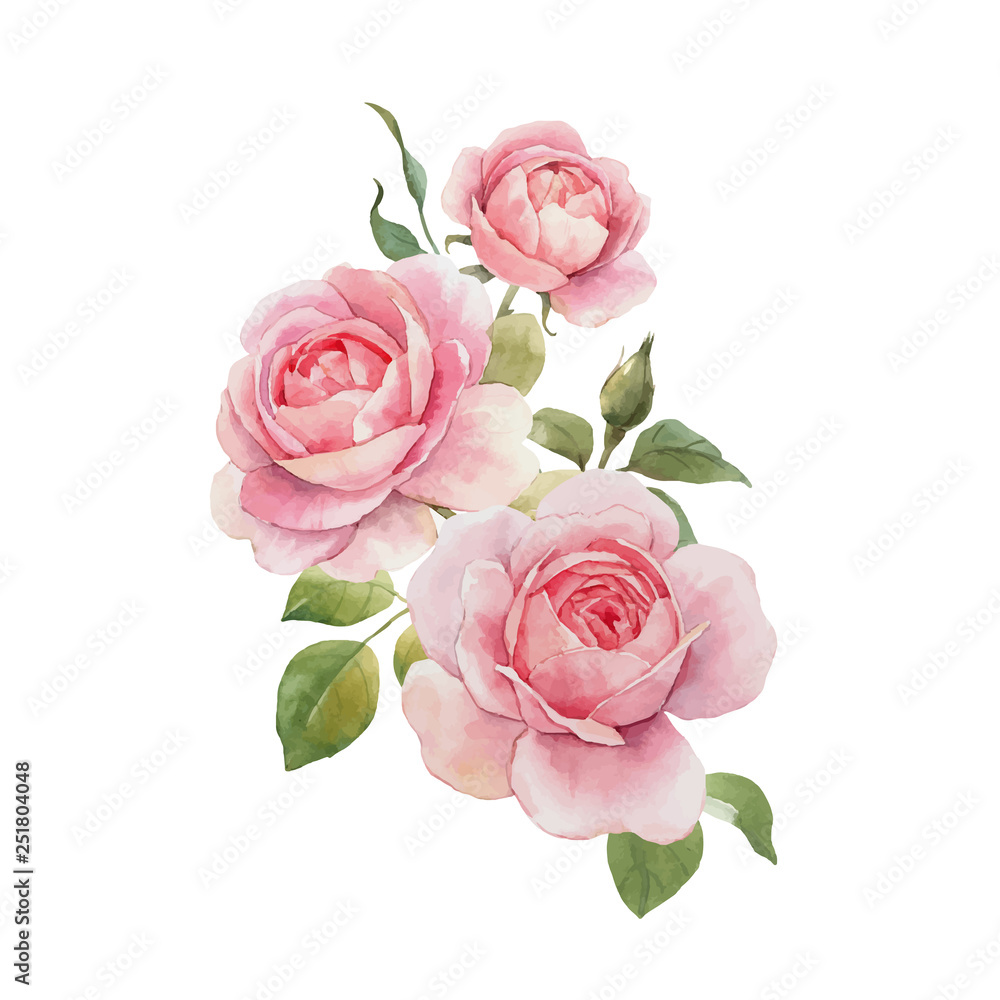 Fototapety, obrazy: Watercolor rose vector omposition
