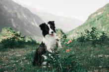 Beautiful Black And White Dog ...