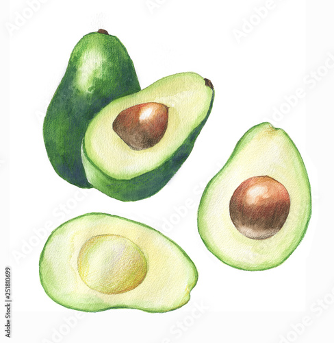 Watercolor hand drawn illustration with fresh green avocado on the white background Wall mural